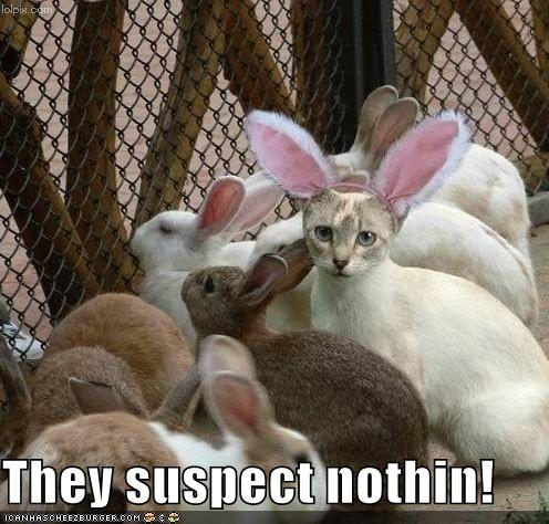 d0d28-funny-pictures-cat-disguised-rabbit