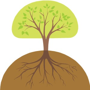 tree root 2